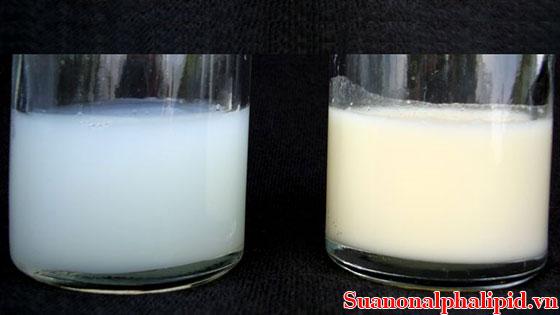 Phân biệt sữa non với sữa thông thường