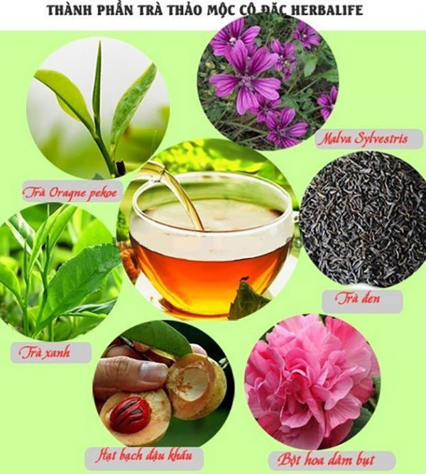 Thành phần của herbalife tea concentrate